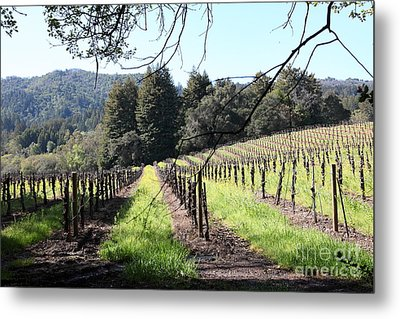 California Vineyards In Late Winter Just Before The Bloom 5d22053 Metal Print by Wingsdomain Art and Photography