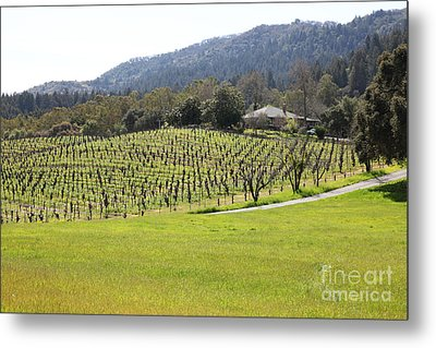 California Vineyards In Late Winter Just Before The Bloom 5d22073 Metal Print by Wingsdomain Art and Photography