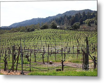 California Vineyards In Late Winter Just Before The Bloom 5d22088 Metal Print by Wingsdomain Art and Photography
