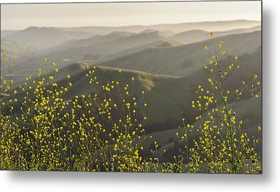 Metal Print featuring the photograph California Wildflowers by Steven Sparks