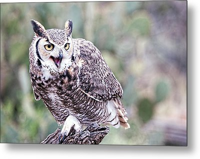 Metal Print featuring the photograph Call Of The Owl by Dan McManus