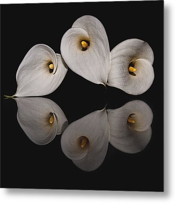 Calla Circle D4423 Metal Print by Wes and Dotty Weber