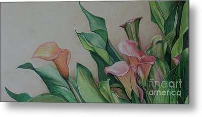 Calla Lilies Metal Print by Charlotte Yealey