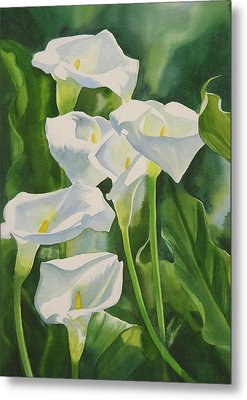 Calla Lilies Metal Print by Sharon Freeman