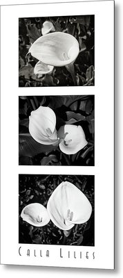 Calla Lilies Vertical With Title Metal Print