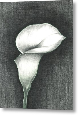 Calla Lily Metal Print by Troy Levesque