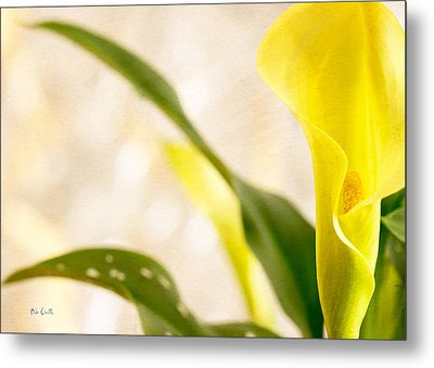 Calla Lily Two Metal Print by Bob Orsillo