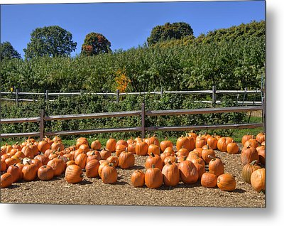 Calling Autumn Metal Print by Joann Vitali