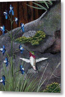 Calliope Hummingbird Metal Print by Jennifer Lake