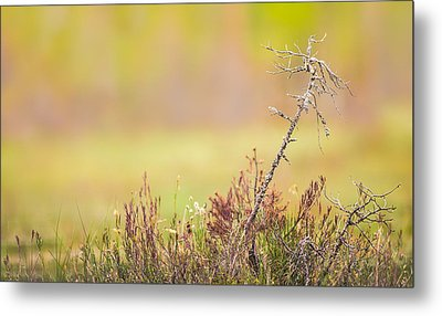 Calm Metal Print by Janne Mankinen
