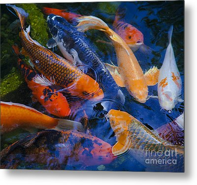 Metal Print featuring the photograph Calm Koi Fish by Jerry Cowart