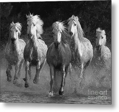 Camargue Horses Running Metal Print by Carol Walker