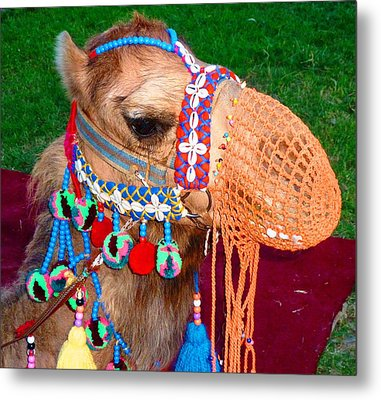 Camel Fashion Metal Print
