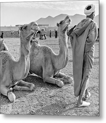 Metal Print featuring the photograph Camel Market, Morocco, 1972 - Travel Photography By David Perry Lawrence by David Perry Lawrence