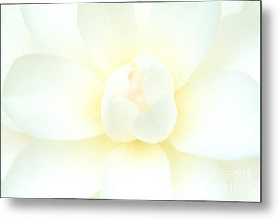 Metal Print featuring the photograph Camelia Flower by Chris Scroggins