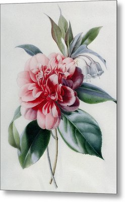 Camellia Metal Print by Marie-Anne