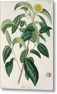 Camellia Thea Metal Print by LFJ Hoquart