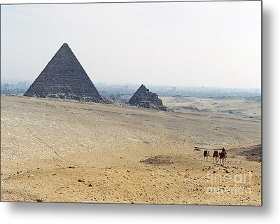 Metal Print featuring the photograph Camels At Giza by Cassandra Buckley