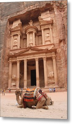 Camels In Petra Metal Print by Rebecca Baker