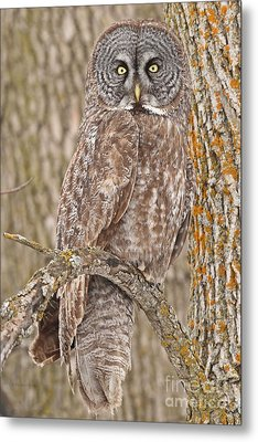 Metal Print featuring the photograph Camouflage-an Owl's Best Friend by Heather King