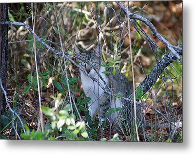 Camouflage Cat Metal Print