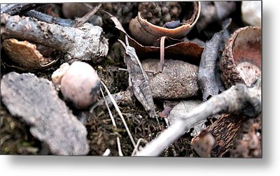 Metal Print featuring the photograph Camouflage Grasshopper by Candice Trimble