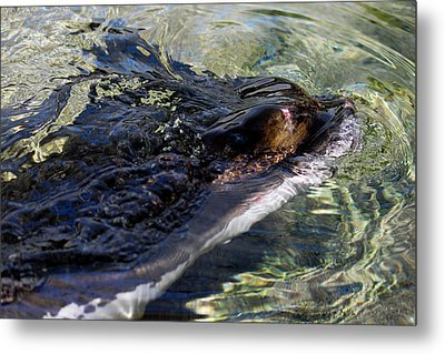Camouflage Metal Print by Ivete Basso Photography