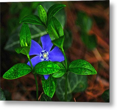 Camouflage Metal Print by Frozen in Time Fine Art Photography
