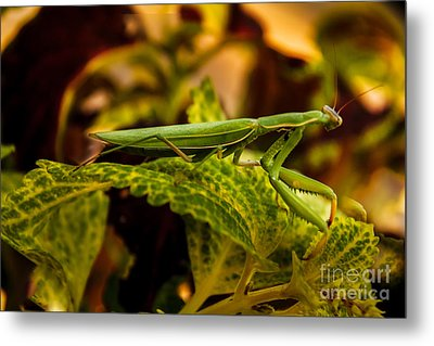 Camouflage Special Metal Print by Robert Bales