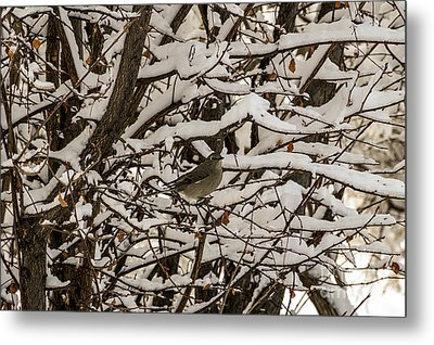 Camouflaged Thrush Metal Print by Sue Smith