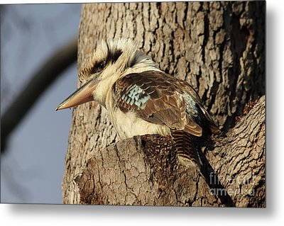 Metal Print featuring the photograph Can Anybody See Me? by Jola Martysz