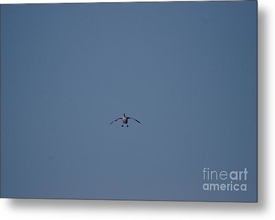 Metal Print featuring the photograph Canada Cleared For Landing by Mark McReynolds