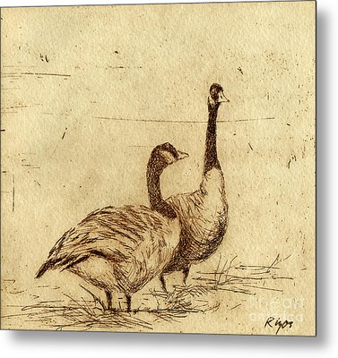 Canada Geese Metal Print by Neil Rizos