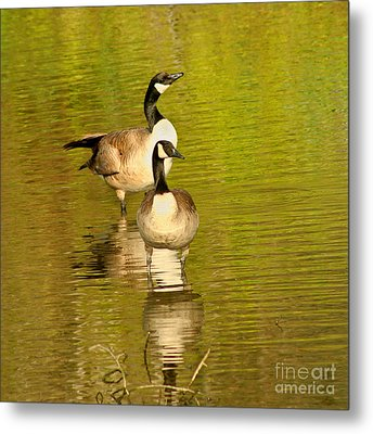 Metal Print featuring the photograph Canada Geese Pair by Bob and Jan Shriner