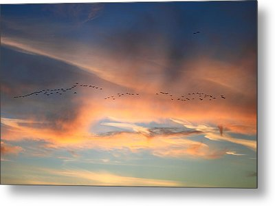 Canada Goose Flock Sunset Metal Print by John Burk