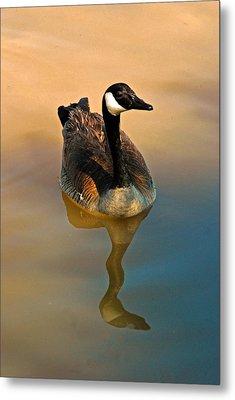 Canada Goose Metal Print by Tam Ryan