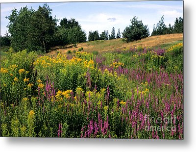 Metal Print featuring the photograph Canada Wildflower Meadow by Chris Scroggins