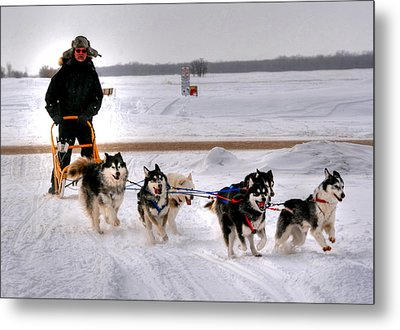 Canadian Dogsled Team Metal Print by Larry Trupp
