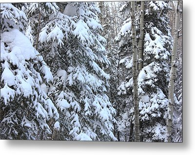 Canadian Forest - Winter Snowfall Metal Print