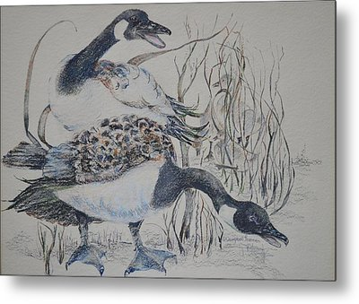 Canadian Geese Metal Print by Dorothy Campbell Therrien