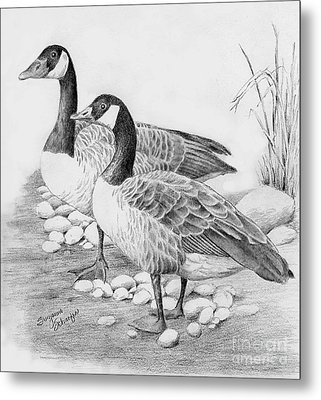 Canadian Geese  Metal Print by Suzanne Schaefer