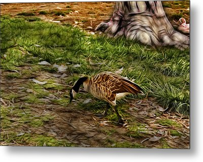 Canadian Goose 9382 F S Metal Print by James Ahn