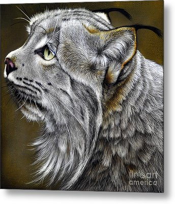 Canadian Lynx Metal Print by Jurek Zamoyski