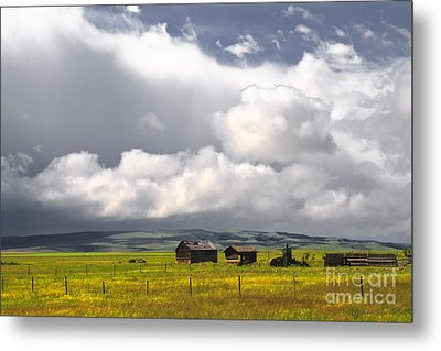 Canadian Prairie Metal Print by Charline Xia