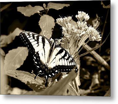 Canadian Tiger Swallowtail In Sepia Metal Print