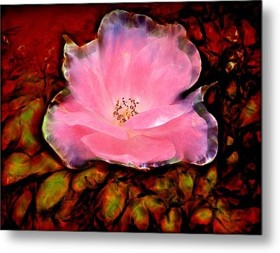 Candy Pink Rose Metal Print by Lilia D