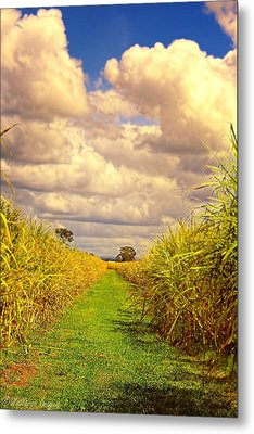 Metal Print featuring the photograph Cane Fields by Wallaroo Images