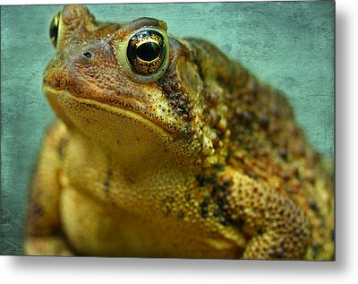 Cane Toad Metal Print by Michael Eingle
