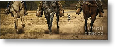 Canine Verses Equine Metal Print by Priscilla Burgers