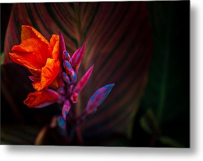 Canna Lilly At Freimann Square Metal Print by Gene Sherrill